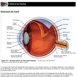 Présentation de l'oeil humain