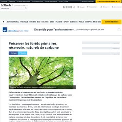 Préserver les forêts primaires, réservoirs naturels de carbone