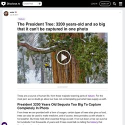 The President Tree: 3200 Years-old And So Big That It Can't Be Captured In One Photo