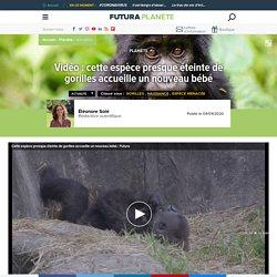 Vidéo : cette espèce presque éteinte de gorilles accueille un nouveau bébé