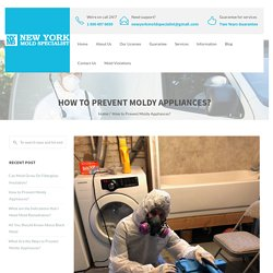 How to Prevent Moldy Appliances? - New York Mold Specialist