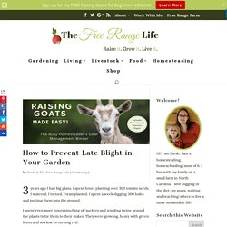 How to Prevent Late Blight in Your Garden - The Free Range Life