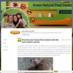 Prevent your house from rodent with the best rodent control
