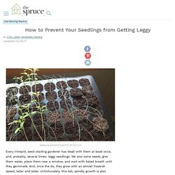 How to Prevent Seedlings From Getting Leggy