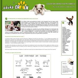 Eduka' Chien : préventions des morsures de chiens, écoles primaires et maternelles