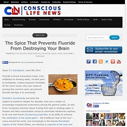 The Spice That Prevents Fluoride From Destroying Your Brain