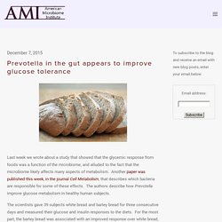 Prevotella in the gut appears to improve glucose tolerance — The American Microbiome Institute
