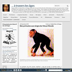 Des primates aux singes du Vieux Monde - ... à travers les âges