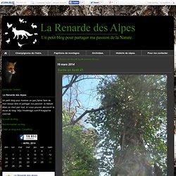 primevère officinale : Tous les messages sur primevère officinale - La Renarde des Alpes