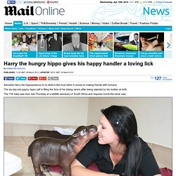 Prince Harry hippo gives his happy handler a loving lick