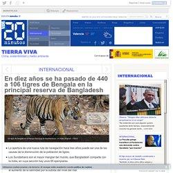 En diez años se ha pasado de 440 a 106 tigres de Bengala en la principal reserva de Bangladesh