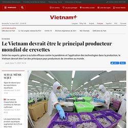 VIETNAM+ 11/03/21 Le Vietnam devrait être le principal producteur mondial de crevettes