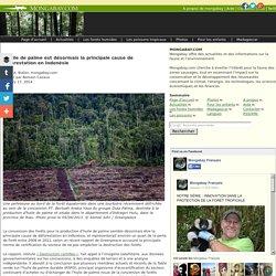 L'huile de palme est désormais la principale cause de déforestation en Indonésie