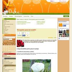 Principalele specii de trandafiri - Arbori si arbusti
