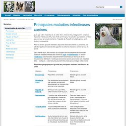 Principales maladies infectieuses canines