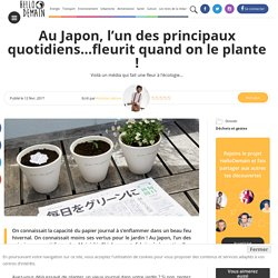 Au Japon, l'un des principaux quotidiens…fleurit quand on le plante ! - Hellodemain