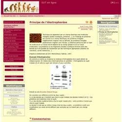 Principe de l'électrophorèse - SVT en ligne