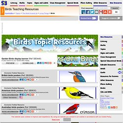 Birds Primary Teaching Resources and Printables