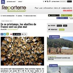 En ce printemps, les abeilles de France sont au plus mal