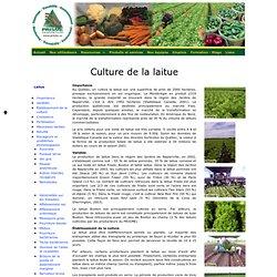 Consortium - Culture de la laitue