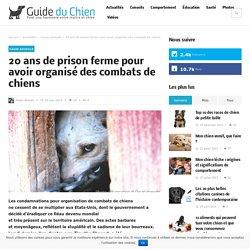 20 ans de prison ferme pour avoir organisé des combats de chiens