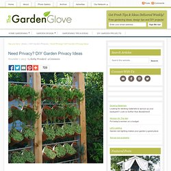 Need Privacy? DIY Garden Privacy Ideas