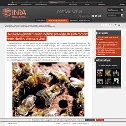 INRA 06/01/15 Nouvelle-Zélande : terrain d'étude privilégié des interactions entre abeilles, Varroa et virus