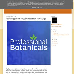 natural probiotics supplements: Natural Supplements for Ligament and Joint Pain in Dogs