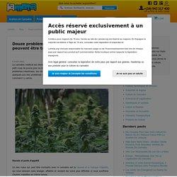 Douze problèmes de santé communs qui peuvent être traités avec le cannabis médical