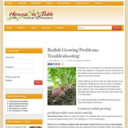 Radish Growing Problems: Troubleshooting - Harvest to Table