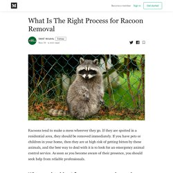 What Is The Right Process for Racoon Removal - SWAT Wildlife - Medium