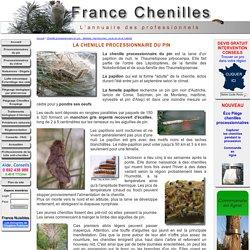 Chenille processionnaire du pin : Biologie, reproduction, cycle de vie et habitat - France chenilles