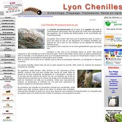 la chenille processionnaire du pin, Thaumetopoea pityocampa - Lyon Chenilles