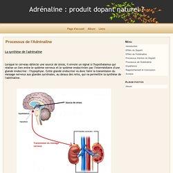 Processus de l'Adrénaline - Adrénaline : produit dopant naturel ?
