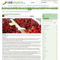 Producción Vegetal: La peor campaña de fresa de la historia - Chil