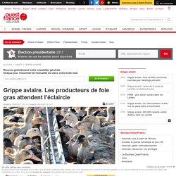 Grippe aviaire. Les producteurs de foie gras attendent l'éclaircie