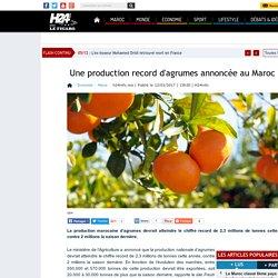 Une production record d'agrumes annoncée au Maroc