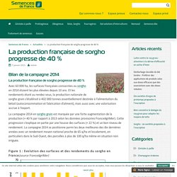 SEMENCES DE FRANCE 07/01/15 La production française de sorgho progresse de 40 %