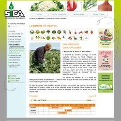 Sica, production de légumes et horticulture en Bretagne