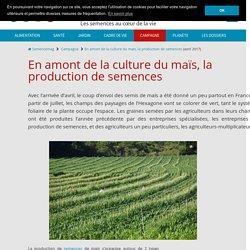 La production de semences de maïs: objectifs et organisation