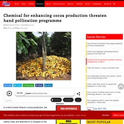 MYJOYONLINE 28/01/19 Chemical for enhancing cocoa production threaten hand pollination programme
