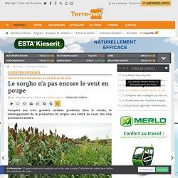 TERRE_NET 30/07/15 Production mondiale de céréales en 2020 Le sorgho n'a pas encore le vent en poupe