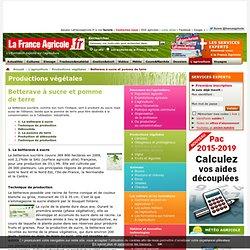 Betterave à sucre etpomme deterre - Productions végétales - L'agriculture - La France Agricole - actualités agriculture, météo, cours et marchés