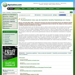 AFP 28/08/15 Oliviers - Multiplication des cas de bactérie Xylella Fastidiosa en Corse