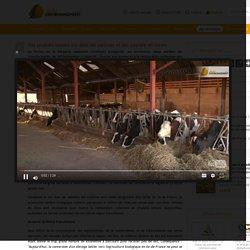 Des produits laitiers bio dans les cantines et des paysans en colère