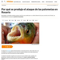 Por qué se produjo el ataque de las palometas en Rosario