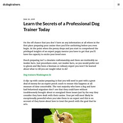 Learn the Secrets of a Professional Dog Trainer Today