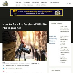 How to Be a Professional Wildlife Photographer