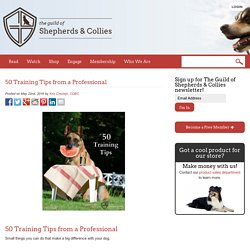 50 Training Tips from a Professional - The Guild of Shepherds & Collies