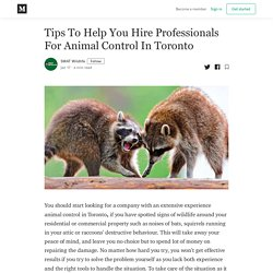 Tips To Help You Hire Professionals For Animal Control In Toronto